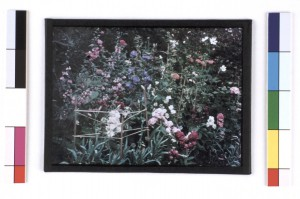 Colour Photograph (Paget Process) of Part of a Flower Bed, by Sarah Angelina Acland, c.1915 Inv.18849.