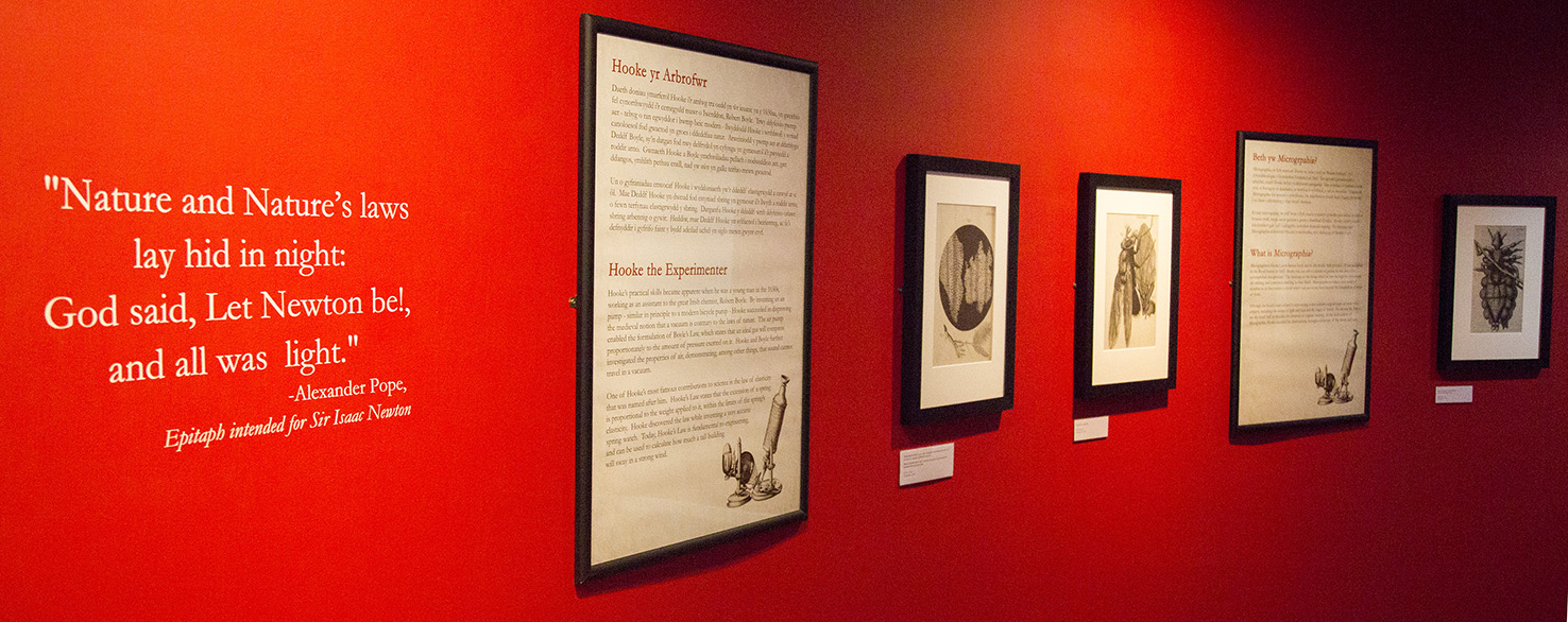 A stretch of red wall in the exhibition with a quote on the far left, and then a a number of frames containing exhibition text and images from Hooke's Micrographia.