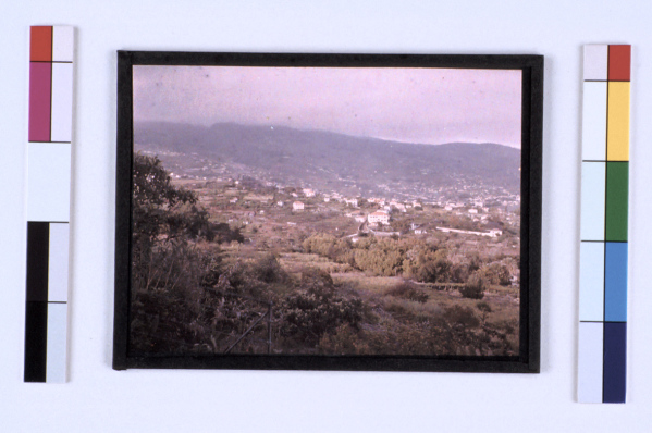 Autochrome of Madeira by Sarah Angelina Acland, c.1910 (Inv. 27910)